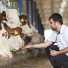 cowgestion-expert-location-vache-02