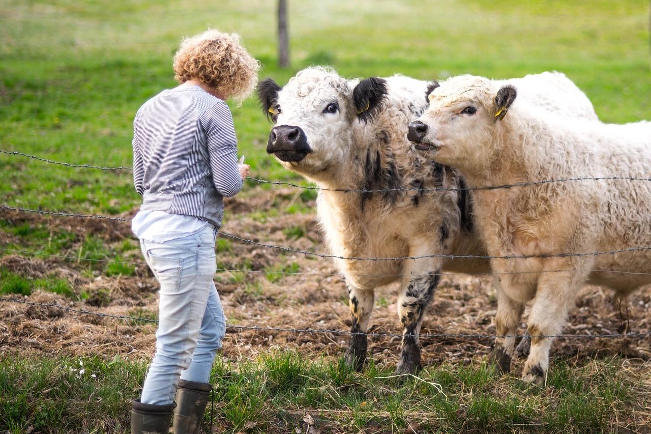 succession exploitation agricole