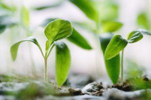 Le stockage carbone grâce à la photosynthèse, est la solution pour aider les éleveurs à obtenir le label Bas Carbone